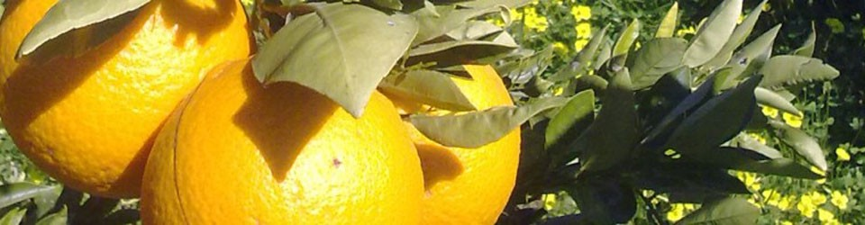 Naranjas del sol