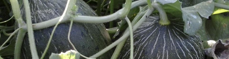 melones_castellon