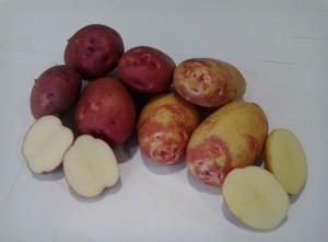 Caja de patata «nueva», 15 kgs.