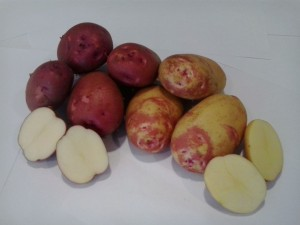 Caja de patata nueva, 10 kgs.