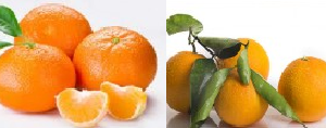 Caja mixta mandarina variedad ORRI y naranja, 15 kgs