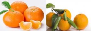 Caja mixta mandarina variedad ORRI y naranja, 10 kgs