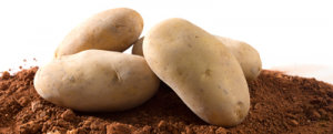 Caja de patata nueva «Blanca», 10kg