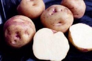 Caja patata nueva «Ojo de perdiz», 10kg